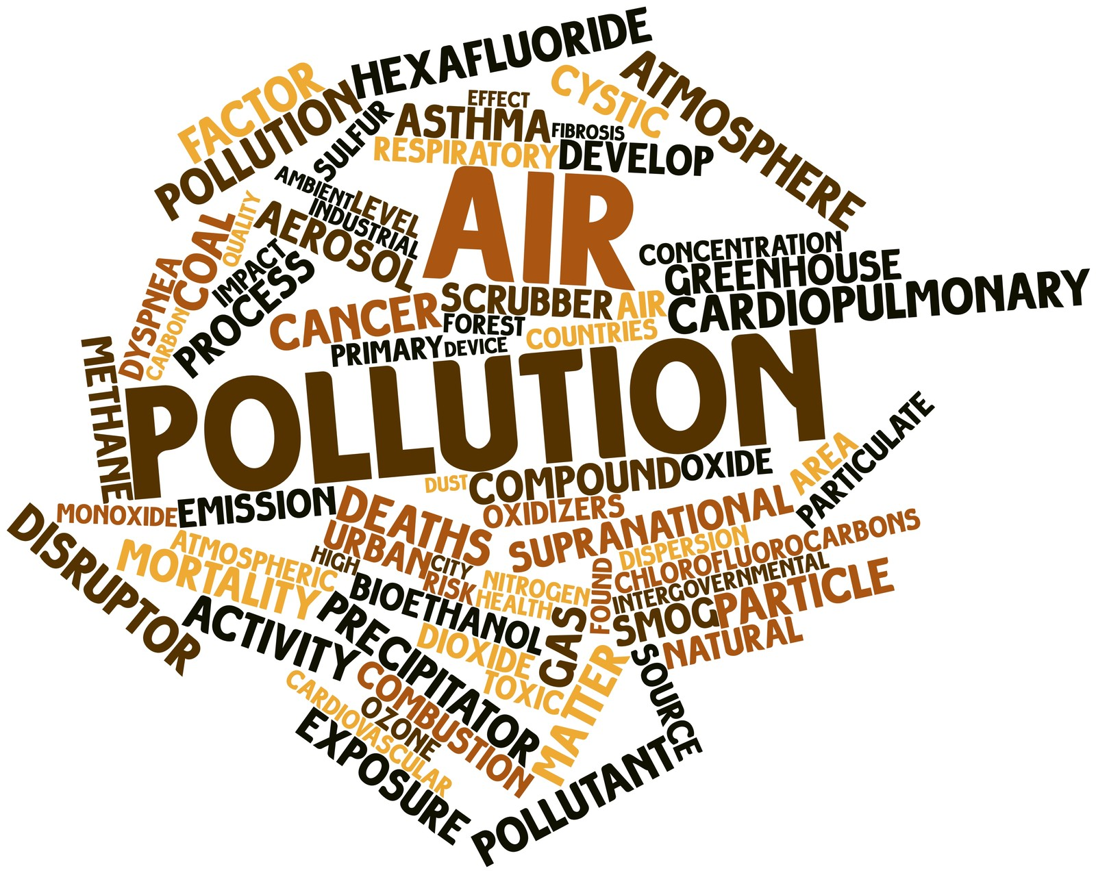 Can Pollutants in the Environment Disrupt Immune Function?