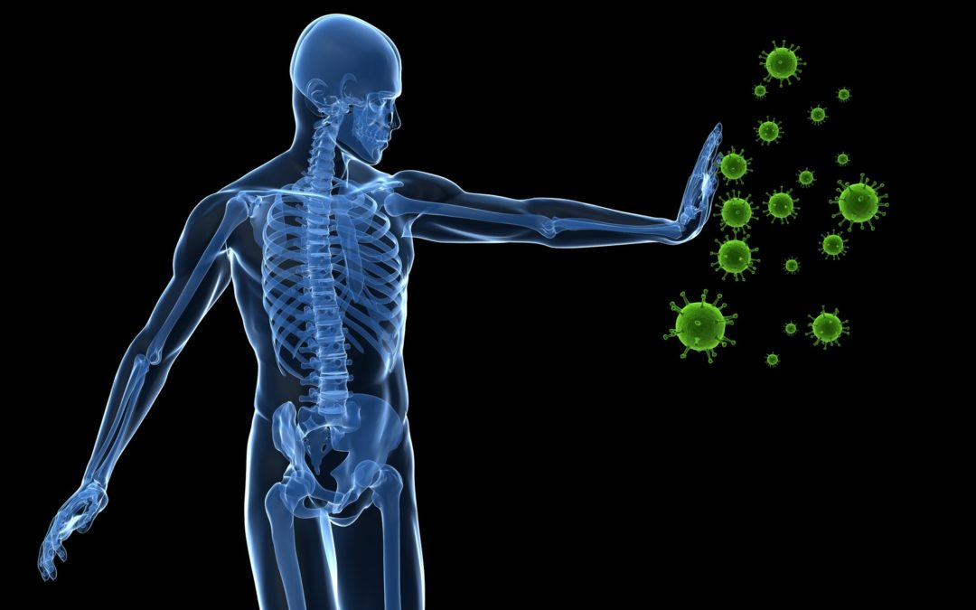 The Two Parts Of Your Immune System And How They Protect You