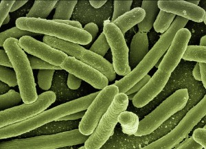 antibiotics kill gut bacteria