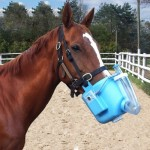 Horse being Nebulized with BioEqualizer Immune Boosting Supplement