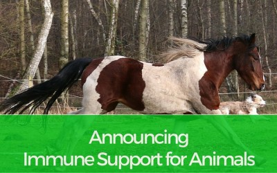 Announcing Immune Support for Animals