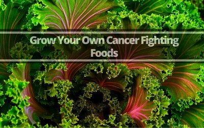 15 Cancer Fighting Foods you can Grow Yourself in your Garden