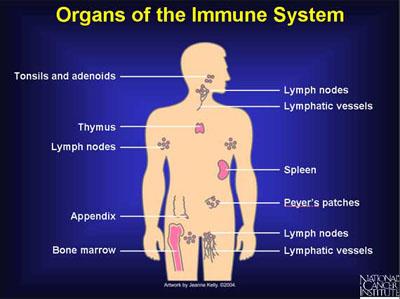 IMMUNE SYSTEM 101