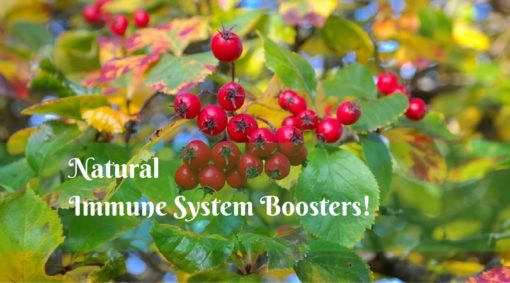 natural immune system boosters