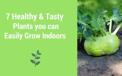 7 Healthy & Tasty Plants you can Easily Grow Indoors