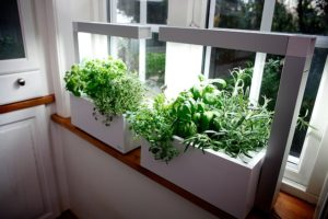 alternative health indoor plants