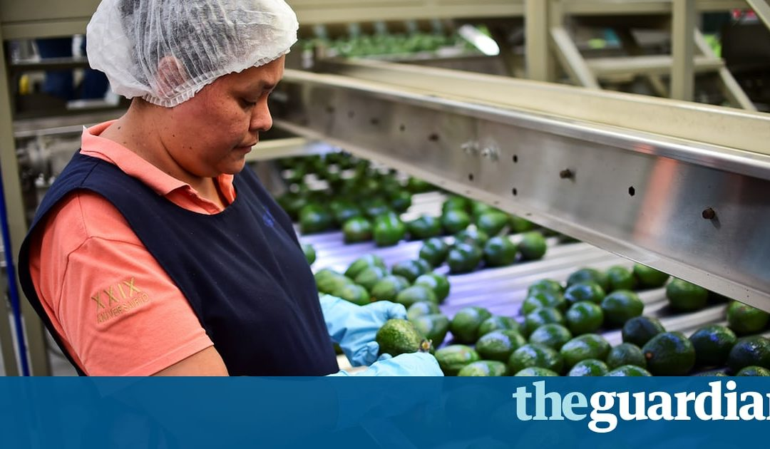Mexico considers importing avocados as staple priced out of consumers' reach
